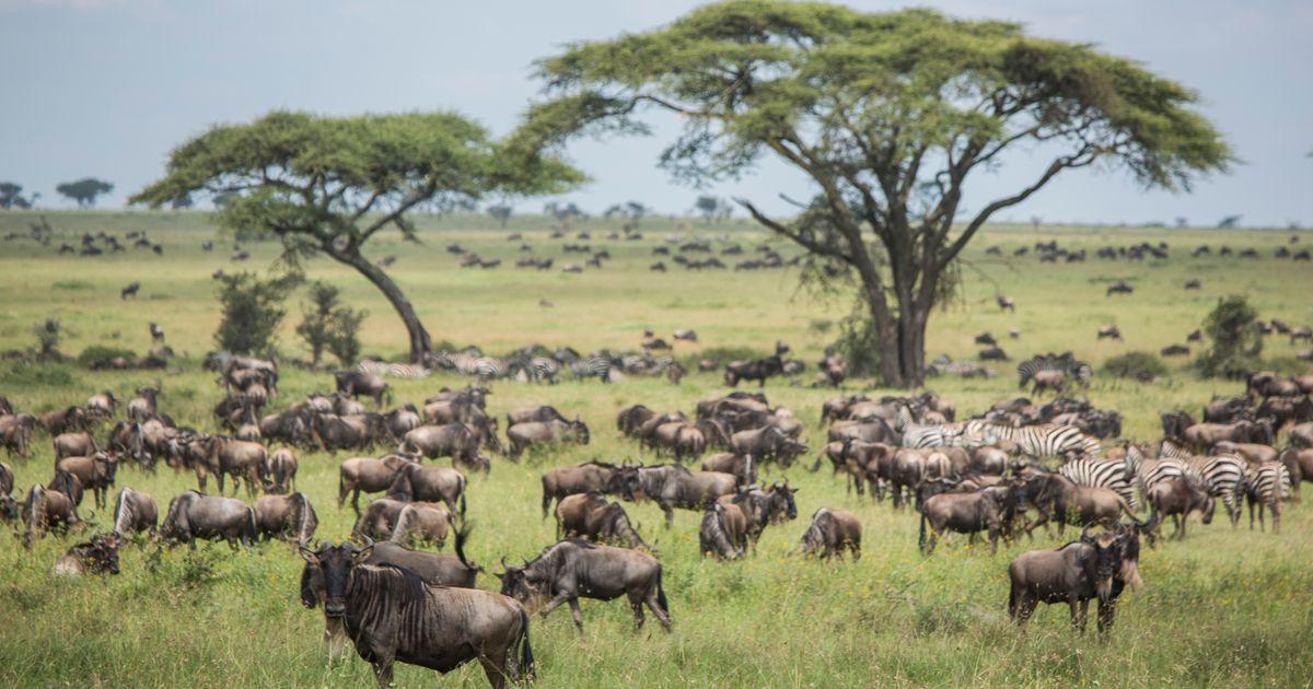 Authentic Migration Safari (with flights)